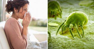 allergie acariens